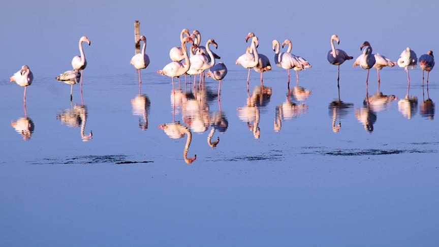 Şeytan Sofrası Lagünü'nü flamingolar renklendiriyor